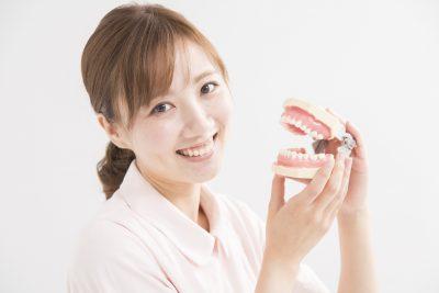 顎模型を持つ白衣の女性(歯のかみ合わせ)