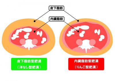内臓脂肪と皮下脂肪を表すイラスト