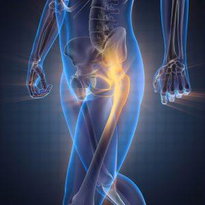 歩行時の股関節の様子