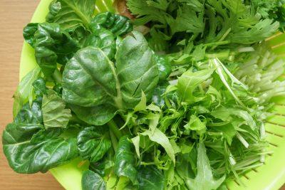 鍋の具材 豊富な野菜