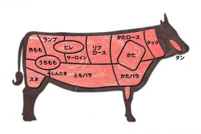 牛肉の部位別の種類がわかる図