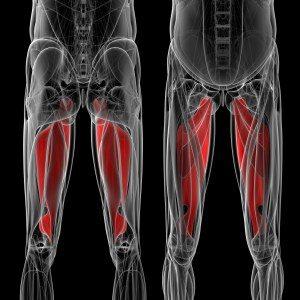 太もも痩せのために鍛えるべき筋肉(内転筋)