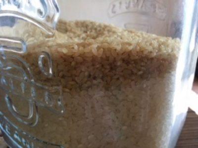 ファンケル発芽米を計量カップにいれたところ