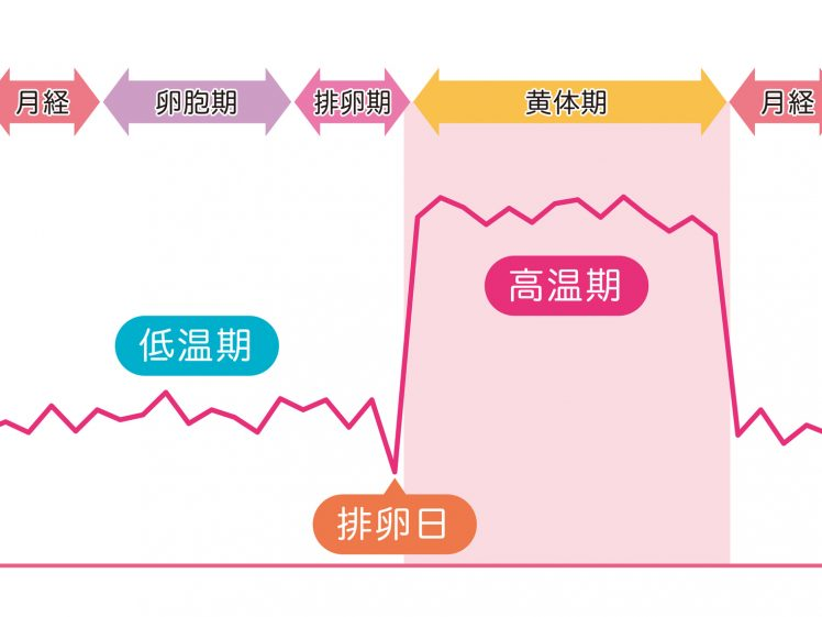 生理周期を示したグラフ
