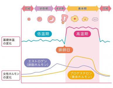 基礎体温表 基礎体温 女性ホルモン 図解