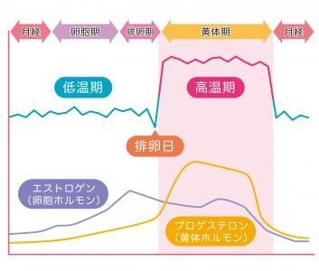 エストロゲンの分泌される時期を表すグラフ