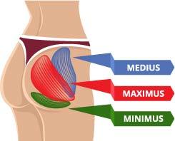 大臀筋、中臀筋、小臀筋を示したイラスト