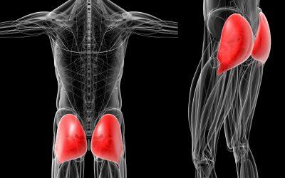 お尻の筋肉を表した人体CT